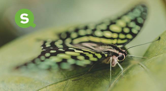 «Эффект бабочки»-2: теперь на Qlik Sense
